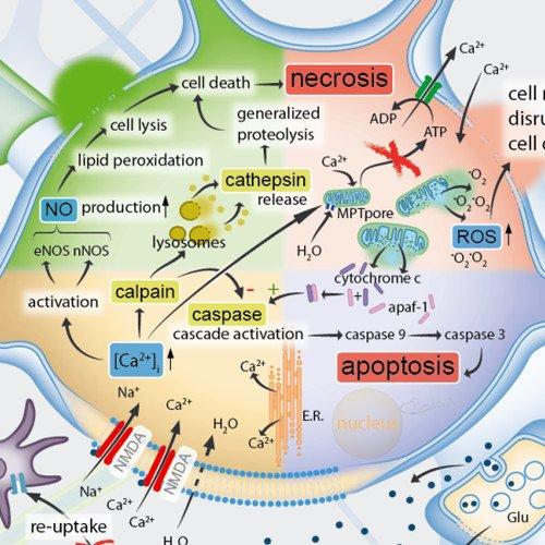 schematic neuron